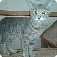 Adopt A Pet :: Al - Ozark, AL