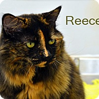 Adopt A Pet :: Reeces - Hamilton, MT