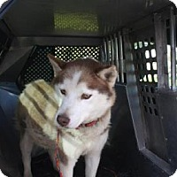 Adopt A Pet :: Daisy (Delilah) - Shingleton, MI