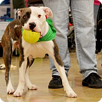 Adopt A Pet :: Dakota - Rockford, IL