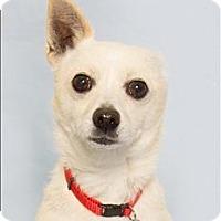 Adopt A Pet :: Oso - San Luis Obispo, CA