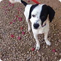 Adopt A Pet :: Marty - Phoenix, AZ