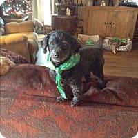 Adopt A Pet :: Kricket - Adoption Pending - Sparta, NJ