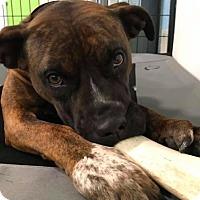 Adopt A Pet :: MeMe - Brunswick, OH