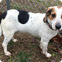 Adopt A Pet :: Ferris - Sparta, NJ