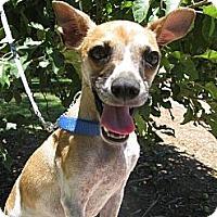 Adopt A Pet :: JASPER - Elk Grove, CA