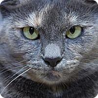 Adopt A Pet :: Rita - Irvine, CA