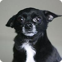 Adopt A Pet :: Suki - Canoga Park, CA