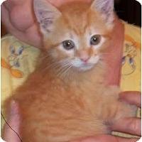 Adopt A Pet :: Tank - Acme, PA