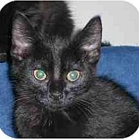 Adopt A Pet :: Kermit - Lombard, IL