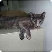 Adopt A Pet :: Yenta - Hamburg, NY