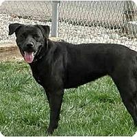 Adopt A Pet :: Precious - Meridian, ID