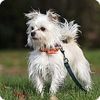 Adopt A Pet :: Cozmo - Rigaud, QC