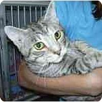 Adopt A Pet :: Silverado - Arlington, VA