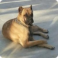 Adopt A Pet :: Leah - Van Nuys, CA