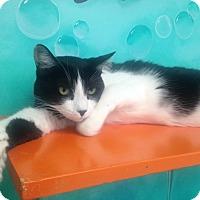 Adopt A Pet :: Ricky - Newport Beach, CA