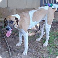 Adopt A Pet :: Tucker - Lufkin, TX