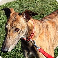 Adopt A Pet :: Palmer - Florence, KY