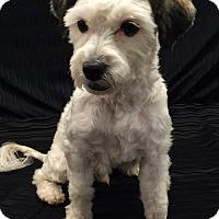 Adopt A Pet :: Linus - Encino, CA