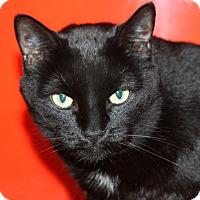 Adopt A Pet :: Marley - Sarasota, FL