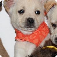 Adopt A Pet :: Kokomo - Waldorf, MD