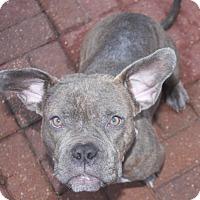 Adopt A Pet :: Slink - Houston, TX