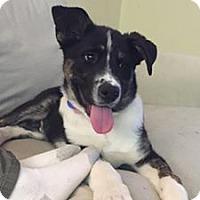 Adopt A Pet :: Quinn - Santa Monica, CA