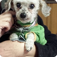 Adopt A Pet :: Diesel - Toronto, ON