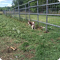 Adopt A Pet :: Naughty - Hohenwald, TN