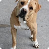 Adopt A Pet :: Jimmie - Las Vegas, NV