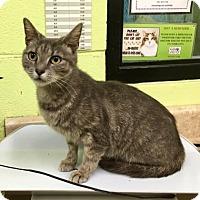 Adopt A Pet :: Nanny - Greenville, NC