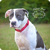 Adopt A Pet :: Hiway - Fort Valley, GA