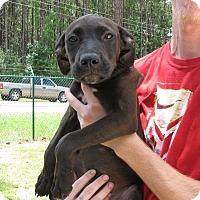 Adopt A Pet :: Louise - Groton, MA