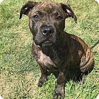 Adopt A Pet :: Giorgio-Adopted! - Detroit, MI