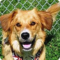 Adopt A Pet :: I'M ADOPTED Leo Grabow - Oswego, IL