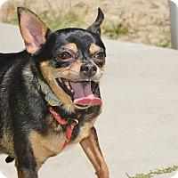 Adopt A Pet :: Mojo - Meridian, ID