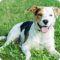 Adopt A Pet :: Maddie - Georgetown, KY