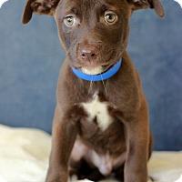 Adopt A Pet :: Janson - Waldorf, MD