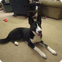 Adopt A Pet :: Gracie - Northfield, MN