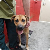 Boxer Mix Dog for adoption in Pikeville, Kentucky - Ralph