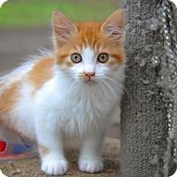 Adopt A Pet :: Stanley - Santa Rosa, CA