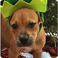 Adopt A Pet :: Olivia - Mobile, AL