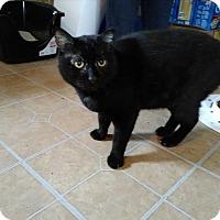 Adopt A Pet :: Bestat - Hinesville, GA
