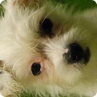 Adopt A Pet :: Buttons - Vacaville, CA