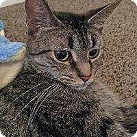 Adopt A Pet :: Noodles - Troy, MI