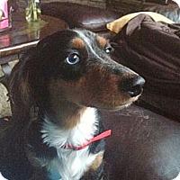 Adopt A Pet :: WHISPA - Portland, OR