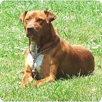Adopt A Pet :: Rusty - Mooy, AL