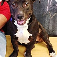 Adopt A Pet :: Denzel - Vista, CA