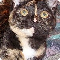 Adopt A Pet :: Reeses - Germansville, PA