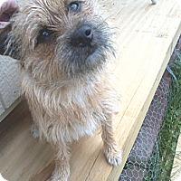 Adopt A Pet :: Belvadere - Cumberland, MD